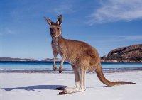 Чем запоминается Австралия