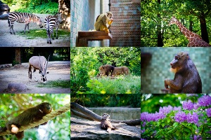 berlin-zoological-garden
