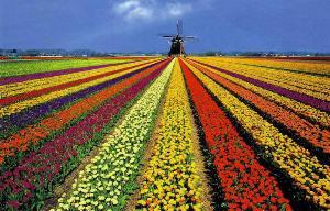 Оформление визы в Голландию